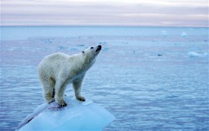 Polar bear on dwindling Arctic ice sheet PA