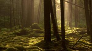 A forest in Nova Scotia The Chronicle Herald