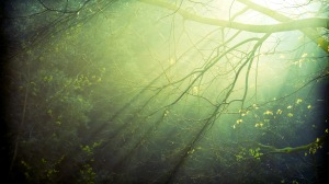Light of Nature  Source Pichost