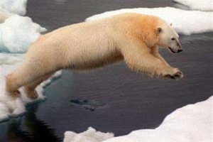 Polar Bear in the Chukchi Sea Sounce Reuters Greenpeace-Beltra