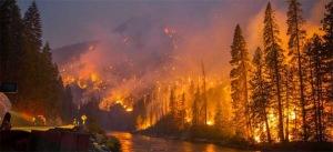 Washington State Fire