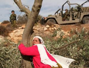 A Palestinian woman clings to one of her olive trees threatened for demolition by the IDF. Source Reuters.