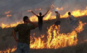 palestinian-protesters-stand-amid-blazes-set-by-settlers-to-their-olive-groves-photo-source-transcend